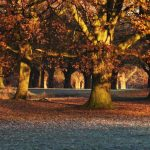 A photo of early morning sun among the woodland of Sefton park, Liverpool.