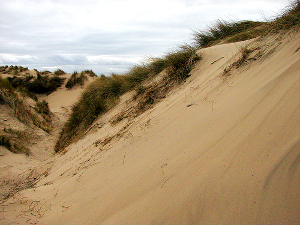 Photograph of sand dunes at Crosby, Sefton
