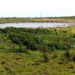 Photograph of Lunt Meadows nature reserve, Sefton, Lancashire