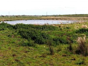 Photograph of Lunt Meadows nature reserve, Sefton, Lancashire